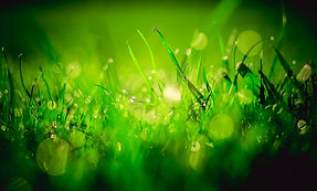 herbs-3461019_1920.jpg