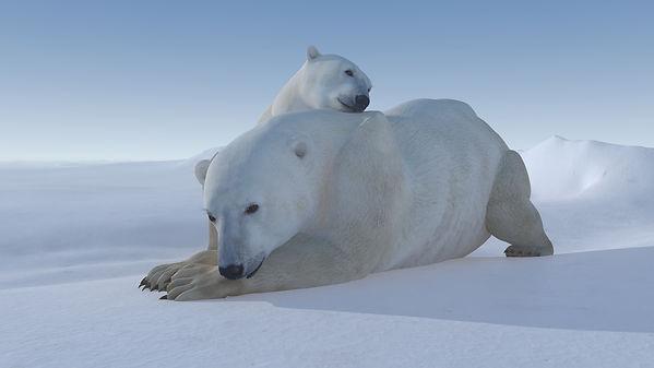 Polar Bear Family 3.jpg