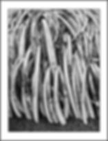 AR Trigger - Steidl Tusk Pile.jpg