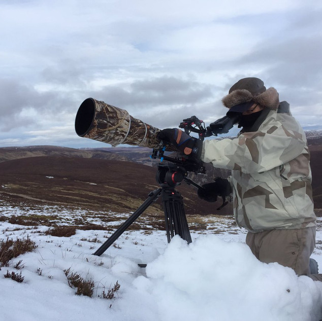 Filming mountain hares