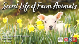 Secret Like of Farm Animals