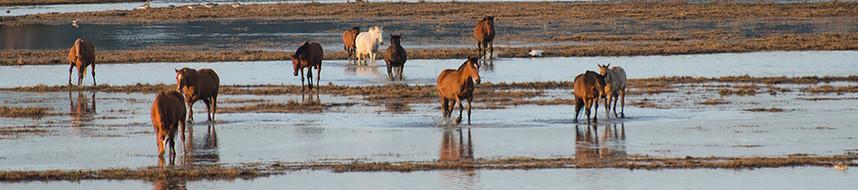 Marismeno Horses Spain