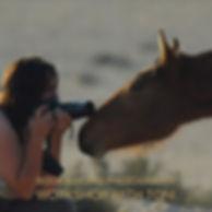 horse for workshops.jpg
