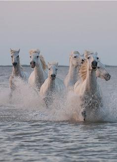 Horses in water