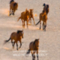 horse stories block.jpg