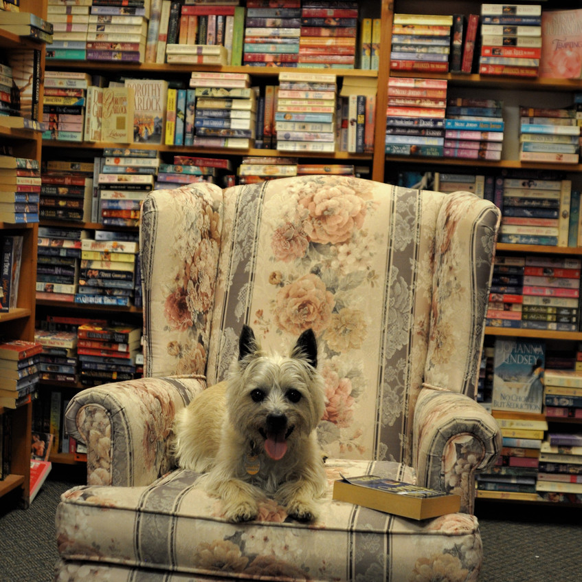 Duncan at Bearly Used Books