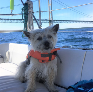 Sailing under the bridge and other stops