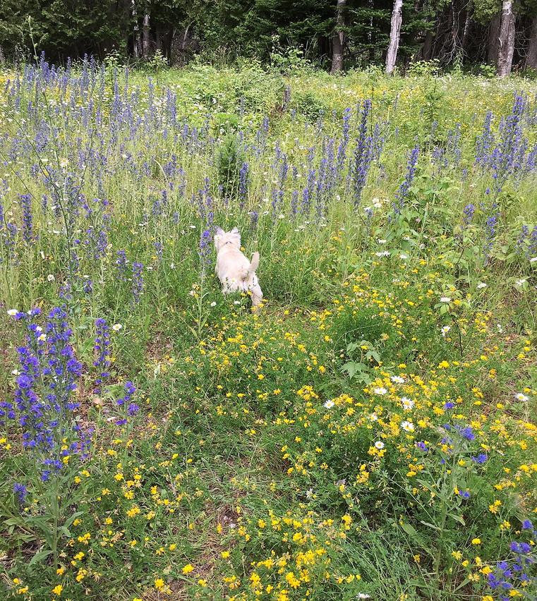 Duncan in flowers