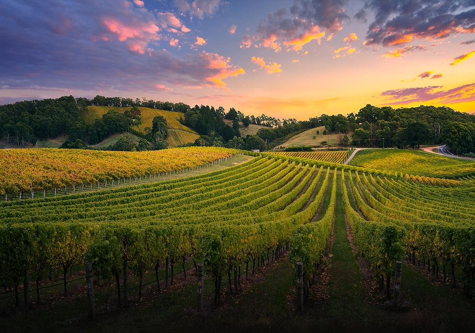 Wine-Tourist-Magazine-Landing-Page-Image