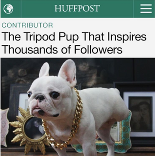 Huffington Post | The Tripod Pup That Inspires Thousands of Followers