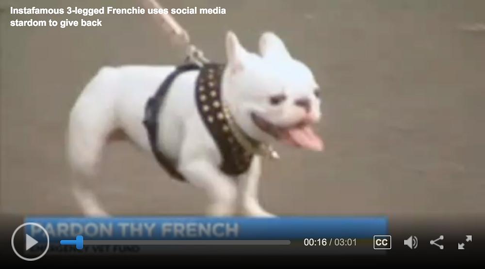 Pardon Thy French Emergency Vet Fund