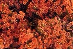Burnt Orange (2).jpg