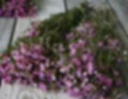 Wholesale Waxflower