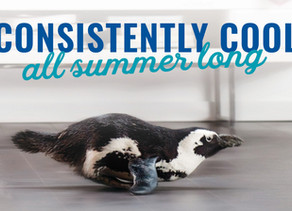 Get Consistent Comfort this Summer!