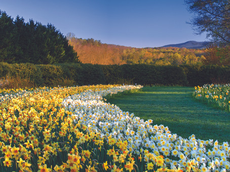Georgia Spring Bucket List