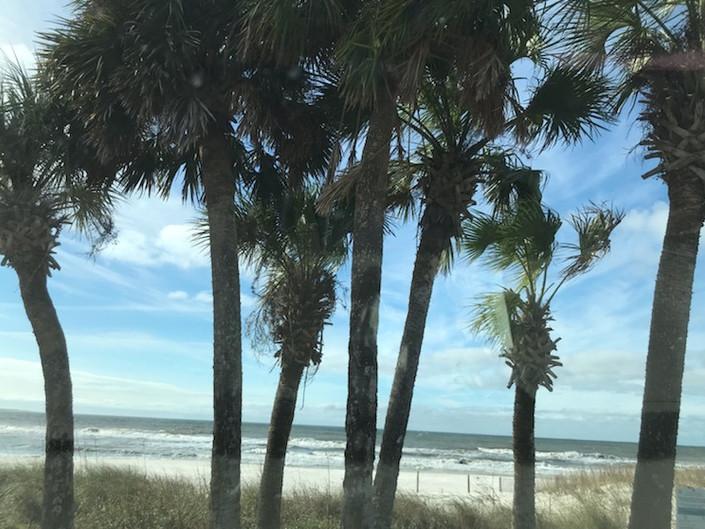 BeachPalmTrees_edited.jpg