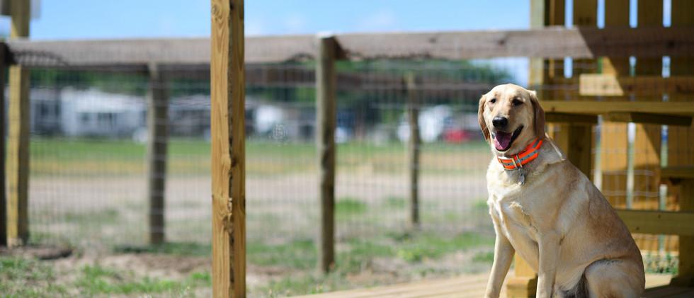 Southern Leisure Dog Park