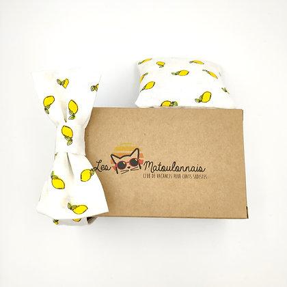 Noeud papillon pour chat Les Matoulonnais