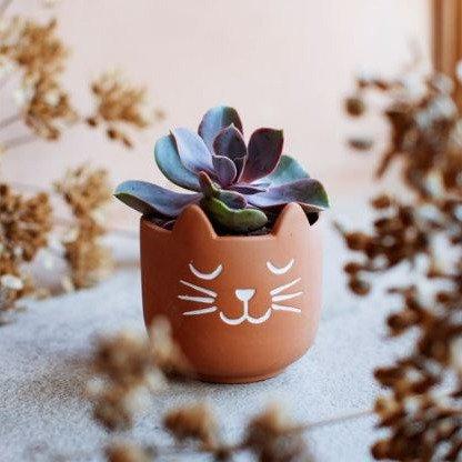 Mini Pot de fleur tête de chat