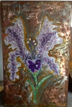 Iris Dreams II