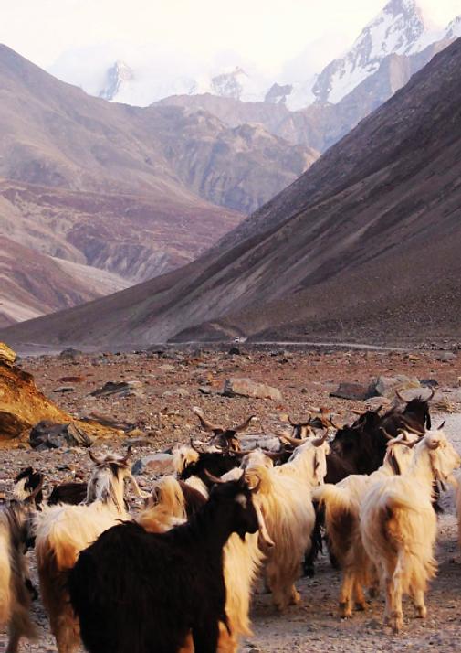 HG-Nepal.png