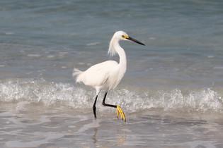 Wading Birds of Florida