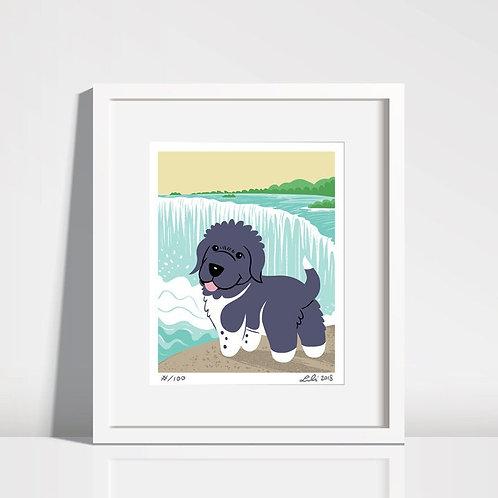 Newfoundland Puppy, Niagara Falls - 8x10 art print