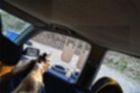 ipsc target idpa shooter