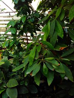 Botanická záhrady (3)