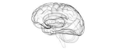 AdobeStock_1767716_edit brain.jpg