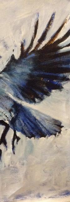Bluebird on fly