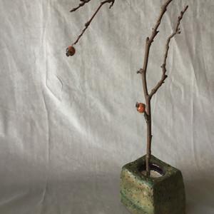Fragile fruit tree