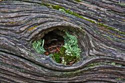 mossy hole