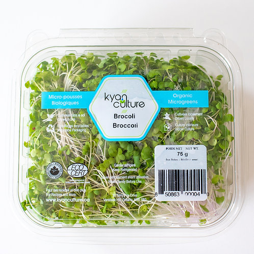 Microgreens - Broccoli