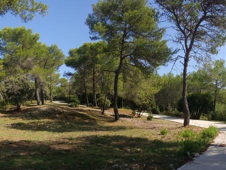 Zastávka u Nîmes v olivovém sadu
