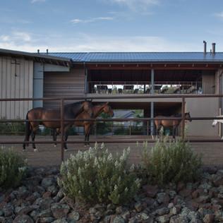 GC_HOUNDS&HORSES-WINQUIST-6876.jpg