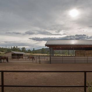 GC_HOUNDS&HORSES-WINQUIST-6380.jpg