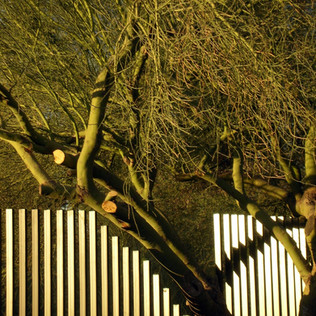 Y5720-Flori-site fence-a.JPG