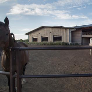 GC_HOUNDS&HORSES-WINQUIST-6846.jpg