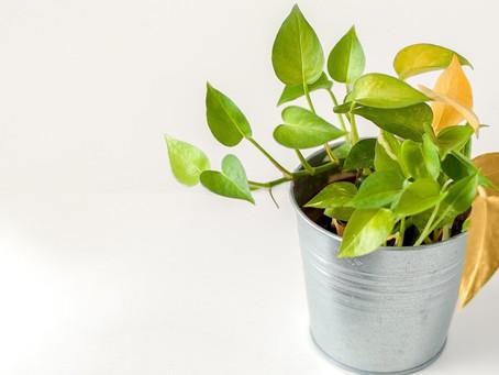 En Sık Rastlanan Bitki Hastalıklarının Nedenleri ve Tedavi Yöntemleri