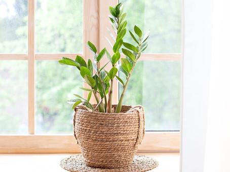 Eviniz İçin En Şifalı İç Mekan Bitkileri!