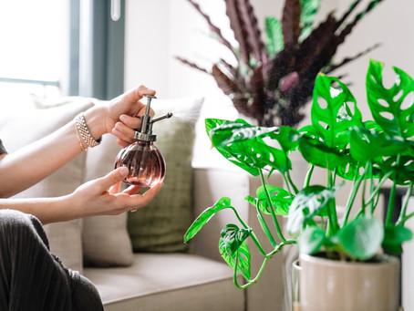 Bitki Bakımı Konusunda Doğru Bilinen Yanlışlar ve Ufak İpuçları