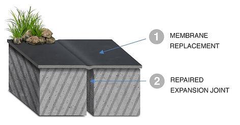 membrane_1.jpeg