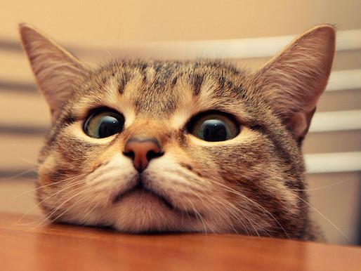 Πόσο μοχθηρή μπορεί να είναι μία γάτα;