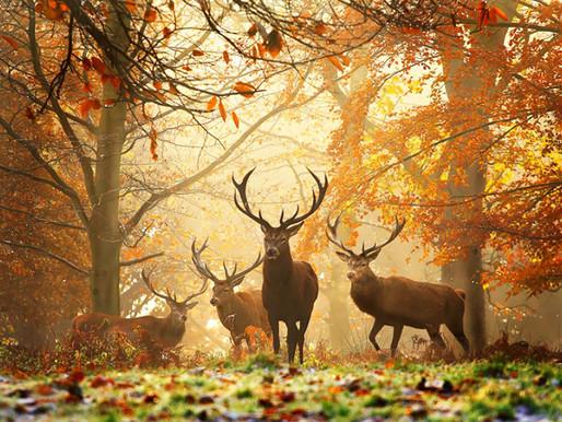 22 υπέροχες φθινοπωρινές φωτογραφίες
