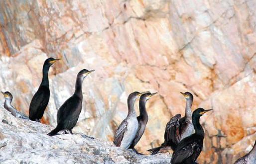 Το μικρό νησί του Αιγαίου που κατοικούν μόνο ζώα