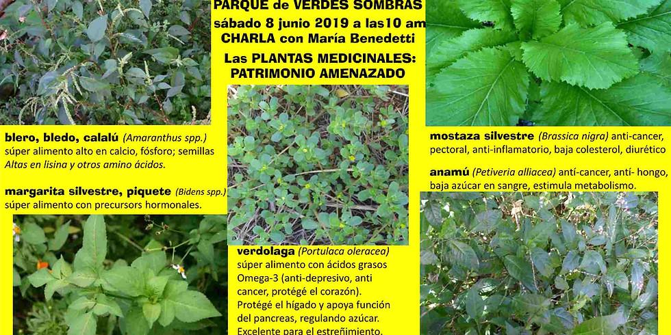 LAS PLANTAS MEDICINALES: PATRIMONIO AMENZADO