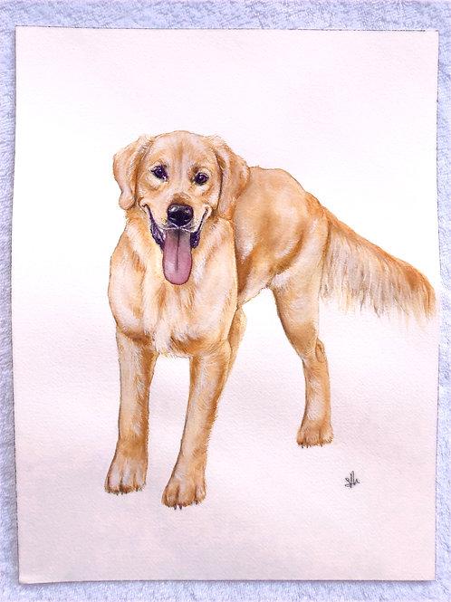"12x16"" Custom Watercolor Pet Portrait"