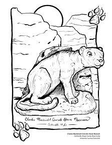Charles Macdonald Cougar Colouring Page.