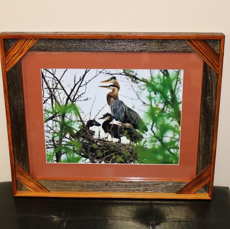 """""""Great Blue Heron Family"""" By: Bob Stucky"""